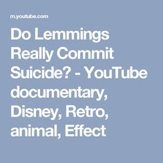 Do Lemmings Really Commit Suicide? - YouTube documentary,   Disney, Retro, animal, Effect