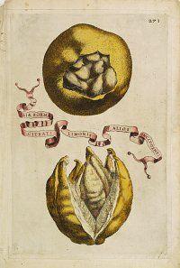 FERRARI, G. B.,  Aliae Formae Citrati Limonis Alios Includentis., antique map, old maps