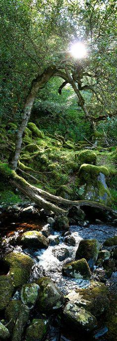 Lasst einfach die Natur so wachsen wie sie wächst das sieht so schön aus ;)