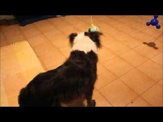 Estimulação Mental / Mental Stimulation for dogs - YouTube