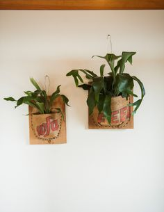 Mounted Staghorn Fern wrapped in Vintage Burlap