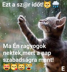 Cute Cats, Rain, Funny, Quotes, Movie Posters, Movies, Animals, Smile, Box
