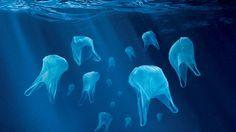 5 razones para usar bolsas de tela | Green Vivant