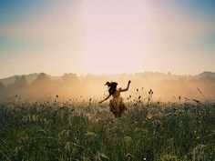 The Land of Make Believe (photo: Russell Hasan) #field #dreamy #happy