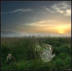 Web grass landscape photography.