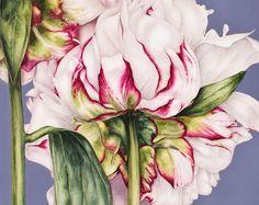 Botanical Print - Peony on Blue,  botanical watercolour, fine art print, flower print, flower watercolour, wall art, botanical illustration