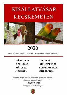 Kisállatvásár Kecskemét 2020 Parrot, Parrot Bird, Parrots