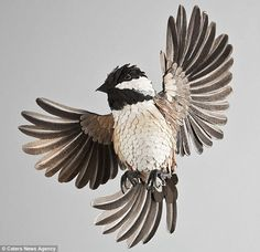 This beautiful chickadee made completely of paper is part of the latest installment from the Colombian artist Diana Herrara