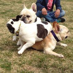 BatPiggy Pile!