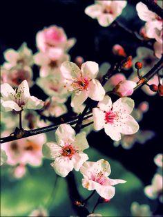 Весенние цветы для вашего вдохновения