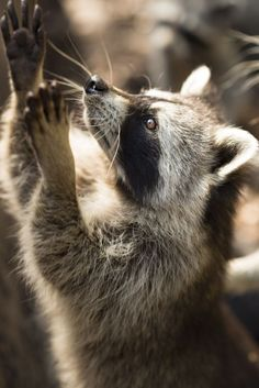 "wildlife-experience: ""Read More """