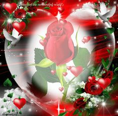 Rose Flower Wallpaper, Flowery Wallpaper, Flowers Gif, Beautiful Rose Flowers, Heart Wallpaper, Love Heart Images, Love You Images, Heart Pictures, Coeur Gif