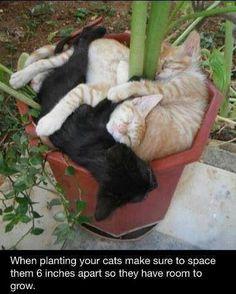 Cat planting...