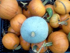 The #vermicompost worked really well for our #pumpkins this year. Happy #Harvest. http://www.naturesfootprint.com/vermiculture
