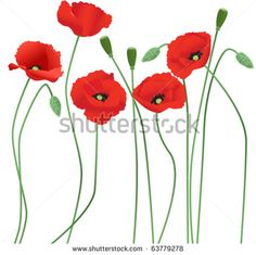 Poppy Stock Photos, Images, & Pictures | Shutterstock