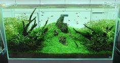 Decorating Ideas:Nature Aquariums And Aquascaping Inspiration Simple And Calm Design Concept For Medium Aquarium