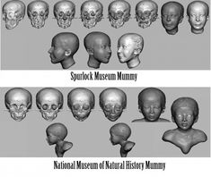 The sequence of steps used to reconstruct the faces of the National Museum of Natural History and Spurlock Museum mummies. (Source: Joe Mullins)