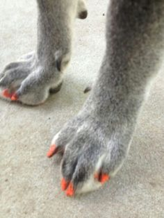 Painted my dogs nails today!!!