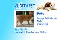 Adopt A Pet: Peko, Stafford and Buttercup - Northern Michigan's News Leader