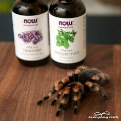 How To Keep Spiders Out Of Your House With Essential Oils - http://www.ecosnippets.com/diy/how-to-keep-spiders-out-of-your-house-with-essential-oils/