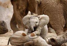 Baby Elephant | La Beℓℓe ℳystère