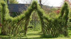 Willow cuttings called 'withies' easily root in either water or moist soil. Living Privacy Fences, Living Willow Fence, Weeping Willow, Lombok, Beach Themes, Hedges, Lush, Backyard, Outdoor Structures