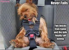 Photo insolite d'une situation vraiment comique : chien assis dans un siège enfant