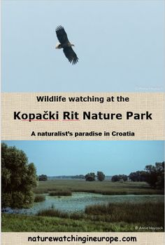 Kopački Rit – Nature-watching in Europe Drainage Ditch, The Far Side, Background Information, Reptiles And Amphibians, Open Water, Nature Reserve, Croatia, National Parks, Wildlife