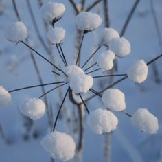 When the white snow falls as if the sky was floating gently to the ground The cool air around me at winter time blows the snow around i. Baby Winter, Winter Snow, Winter Time, Winter Christmas, I Love Snow, Winter Magic, Snow And Ice, Snowy Day, Winter Beauty