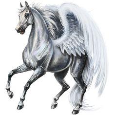 Pegasus Marwari Liver chestnut