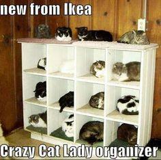 Crazy Cat Lady organizer