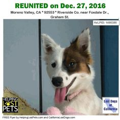 "#REUNITEDThe#Australian Shepherd Mix found in #Moreno Valley#CA has been reunited withherfamily. FoundDec 25 2016. Reunited:Dec 27 2016.Welcome homeBella! Note from finder: After posting under ""Found"" listings on a handful of websites and checking two Facebook lost animals groups knocking door-to-door with little miss Bella and not turning up any results I was afraid we were going to have to leave her with a shelter- Our circumstances were just too tight to keep her. Some time around 11pm I…"