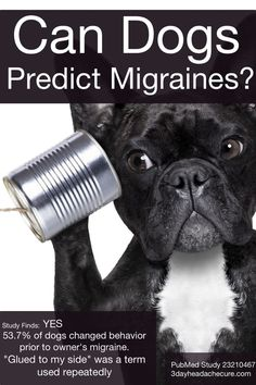 Can your dog predict migraines? This is just the image. no article but have a look around Migraine Savvy Chronic Migraines, Chronic Pain, Chronic Illness, Fibromyalgia, Can Your Pet, Hemiplegic Migraine, Cultura General, Natural Headache Remedies, Migraine