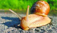 Chcete ochrániť svoju záhradku pred slimákmi? Tu je 10 tipov, ako ich vyhnať zo záhonov! Snail, Home And Garden, Gardening, Animals, Lawn And Garden, Composters, Animales, Animaux, Snails
