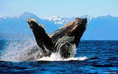 aquatic life | Free Animal wallpaper - Marine life 1 wallpaper - 1680x1050 wallpaper ...