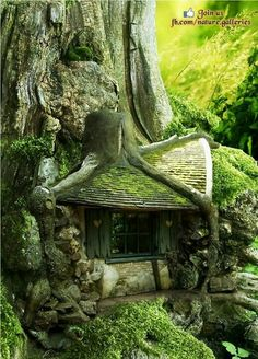 Home in tree roots