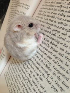Omg it's reading Harry Potter! This miyse has excellent taste in books