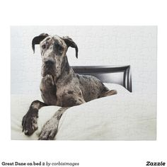 1000 Ideas About Great Dane Bed On Pinterest