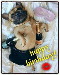 How I plan on spending my Saturday night. Happy Birthday Love Poems, Happy Birthday French Bulldog, Birthday Quotes Funny For Him, Boyfriend Birthday Quotes, Happy Birthday Wishes Cards, Happy Birthday Images, Birthday Messages, Birthday Qoutes, Birthday Cards