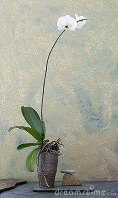 japanese wabi sabi art | Wabi Sabi Orchid