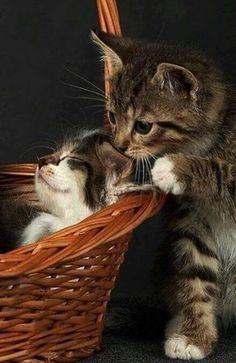 Basket Case...