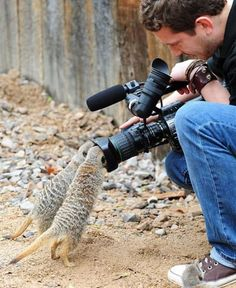 meerkats exploring. I love meerkats i really liked meerkat manor i wish they still showed it - nina
