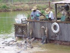 louisiana bayou   Natchitoches, Louisiana: Bayou Pierre Alligator Farm photo, picture ...