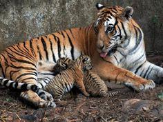 Sonai Rupai Wildlife Sanctuary in Assam, India