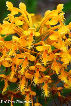 Shade Garden Flowers And Decor Ideas Orange Fringed Orchi Beautiful Gorgeous Pretty Flowers Unusual Flowers, Unusual Plants, Most Beautiful Flowers, Rare Flowers, Different Flowers, Exotic Plants, Yellow Flowers, Pretty Flowers, Beautiful Gorgeous