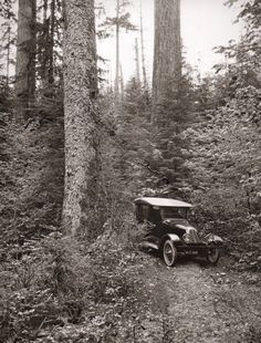 Items similar to Vintage Model T Ford Print Logging Forest Landscape Fathers Day gift Car Collector Mechanic Old cars Antique Art to Frame on Etsy Old Time Photos, Forest Landscape, Model Pictures, Collector Cars, Photo Look, Book Photography, Antique Art, Old Cars, Framed Art