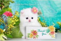 Send this card to all family and friends who made you feel special. Free online Feeling Special Thank You ecards on Thank You Thank You Ecards, Romantic Messages, Welcome To The Group, Toddler School, Happy Friendship Day, Online Greeting Cards, All Family, My Precious, Feeling Special