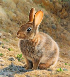 Stock Images, Stock Photos and Arts works - Stock Illustrations Rabbit Drawing, Rabbit Art, Animals And Pets, Baby Animals, Cute Animals, Bunny Art, Cute Bunny, Animal Paintings, Animal Drawings