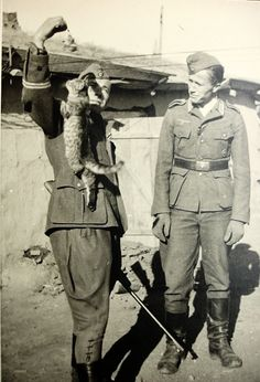 Start German language learning soldier plays with cat.