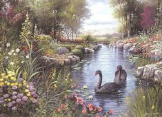Black Swans  by  Andres Orpinas    Cypress Fine Art Licensing